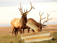 Wholesale Elk Rawhide Chews